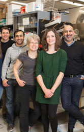 A new study by UCalgary scientists may help explain why people get stressed out just hearing about someone's stressful experience. The paper's authors are, from left: Tamás Füzesi, Nuria Daviu, David Rosenegger, Neilen Rasiah, Dinara Baimoukhametova, Toni-Lee Sterley (lead author), Jaideep Bains (principal investigator), and Agnieszka Zurek. Photo by Adrian Shellard, for the Hotchkiss Brain Institute